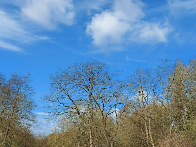Blue sky above the outline of trees