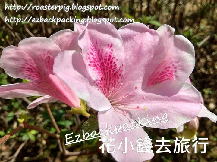 香港花卉展覽2021