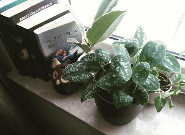 aranżacje roślinne