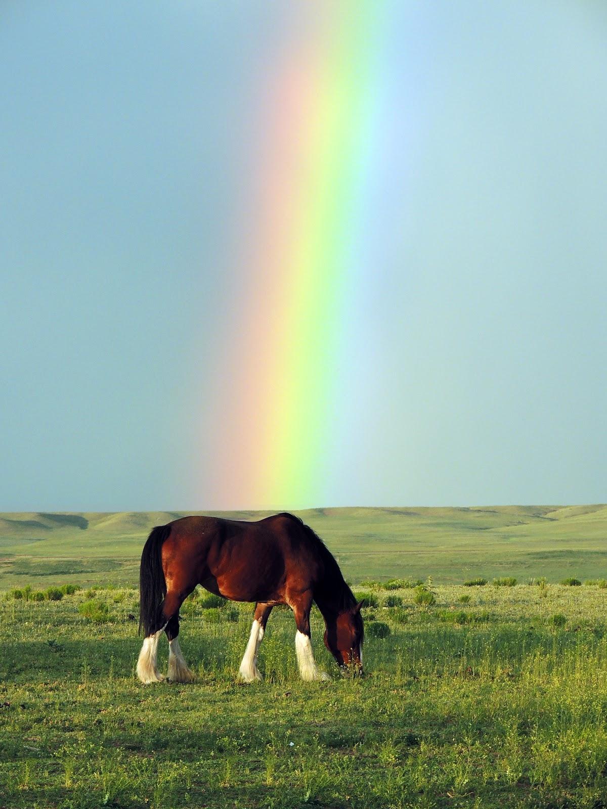 G%2BRainbow Verwunderlich so where Over the Rainbow Dekorationen