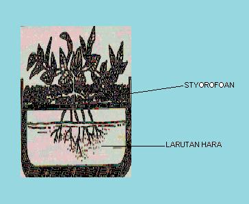 Gambar Komponen-komponen penyusun dalam kultur air