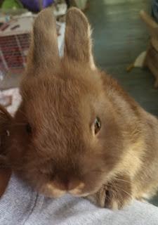clover bunny 5