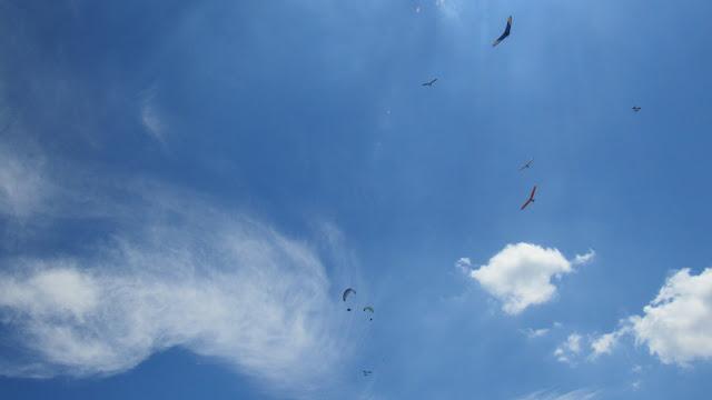 Pássaros e paragliders se misturam no céu azul