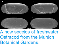 http://sciencythoughts.blogspot.co.uk/2014/09/a-new-species-of-freshwater-ostracod.html