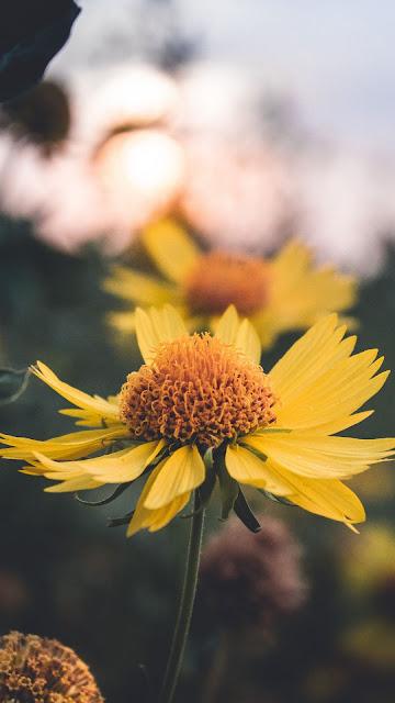Yellow flower Close up Free wallpaper
