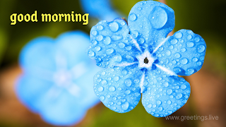 Beautiful Morning blue flowers greetings