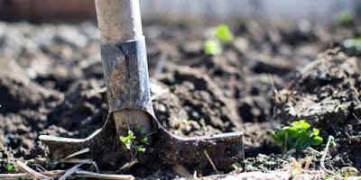 La calidad del suelo de cultivo