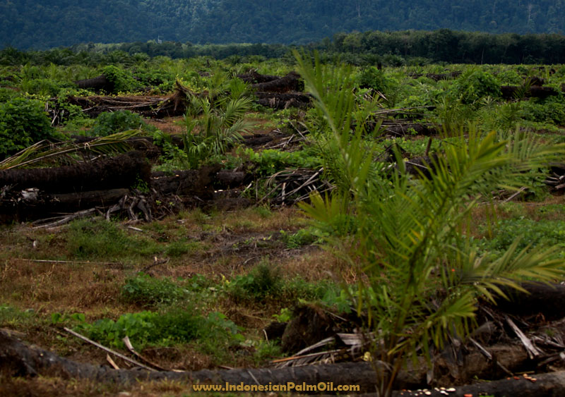 indonesia palm oil zero deforestation