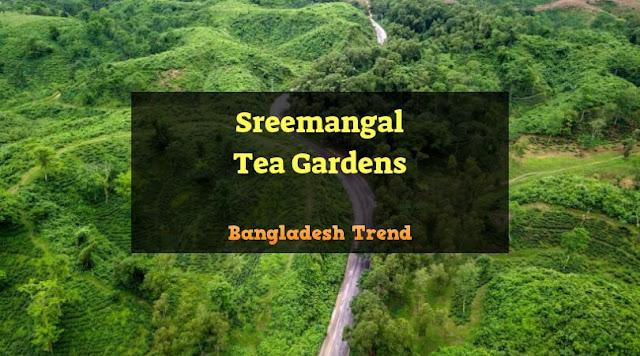 Sreemangal Tea Gardens