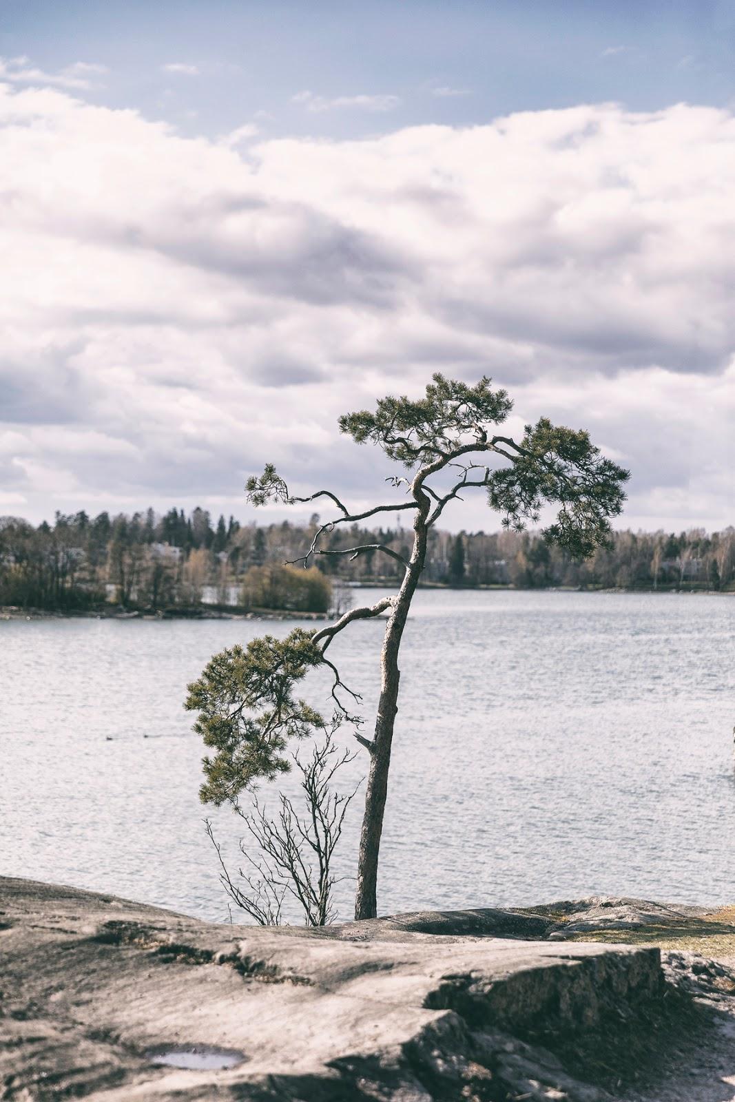 Helsinki, visithelsinki, Seurasaari, Fölisön, Myhelsinki, experience, Suomi, Finland, luonto, nature, outdoors, luontovalokuva, valokuvaus, valokuvaaminen, valokuvaaja, Frida Steiner, Visualaddict, visualaddictfrida, visitFinland, travel, matkailu, matkustus, mänty, pine, scenery