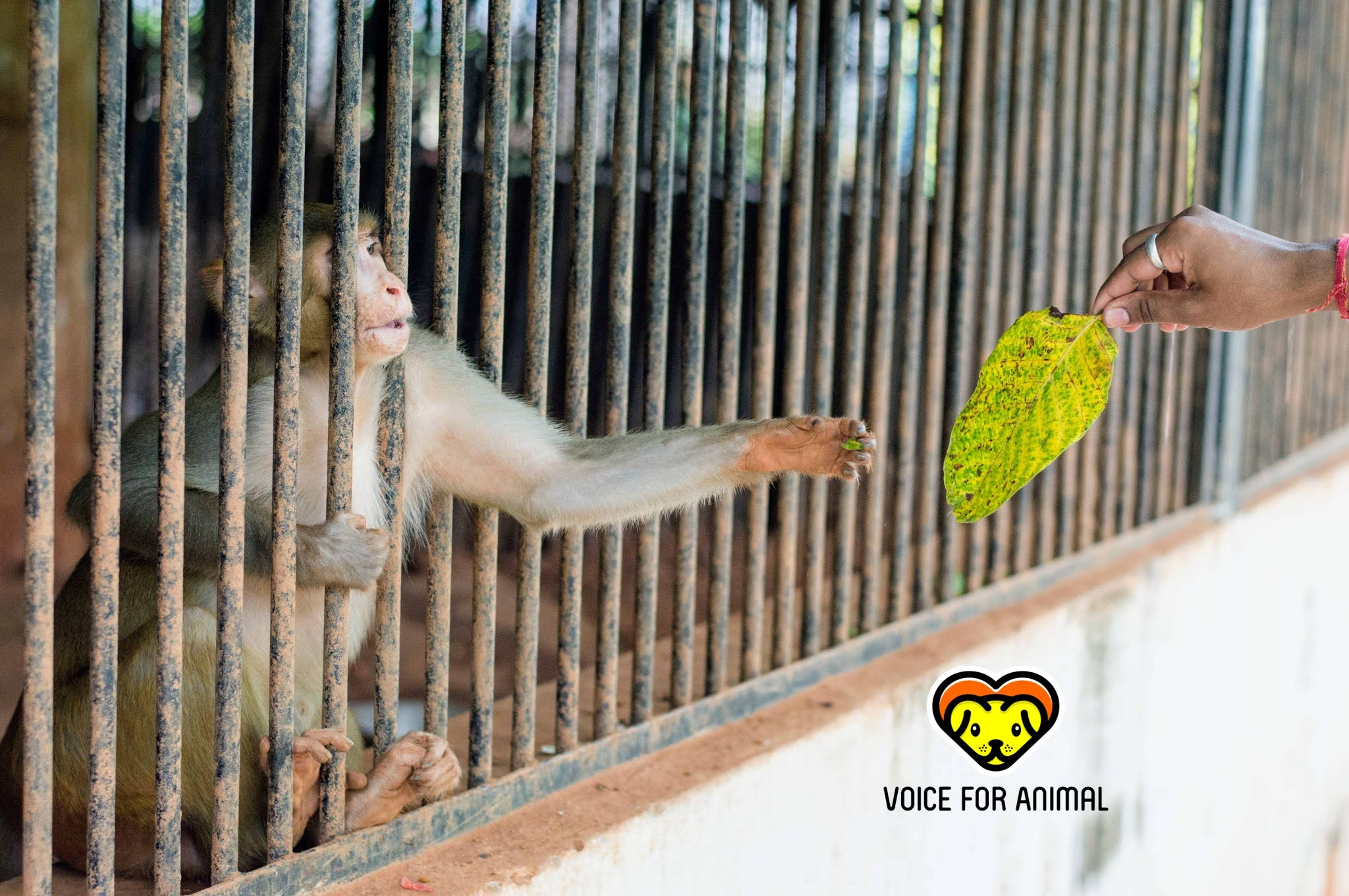 Zoos are Prisons for Animals