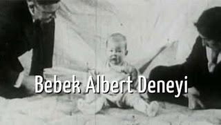 Bilim Dünyasının En Utandırıcı ve Korkunç Olayı: Bebek Albert Deneyi