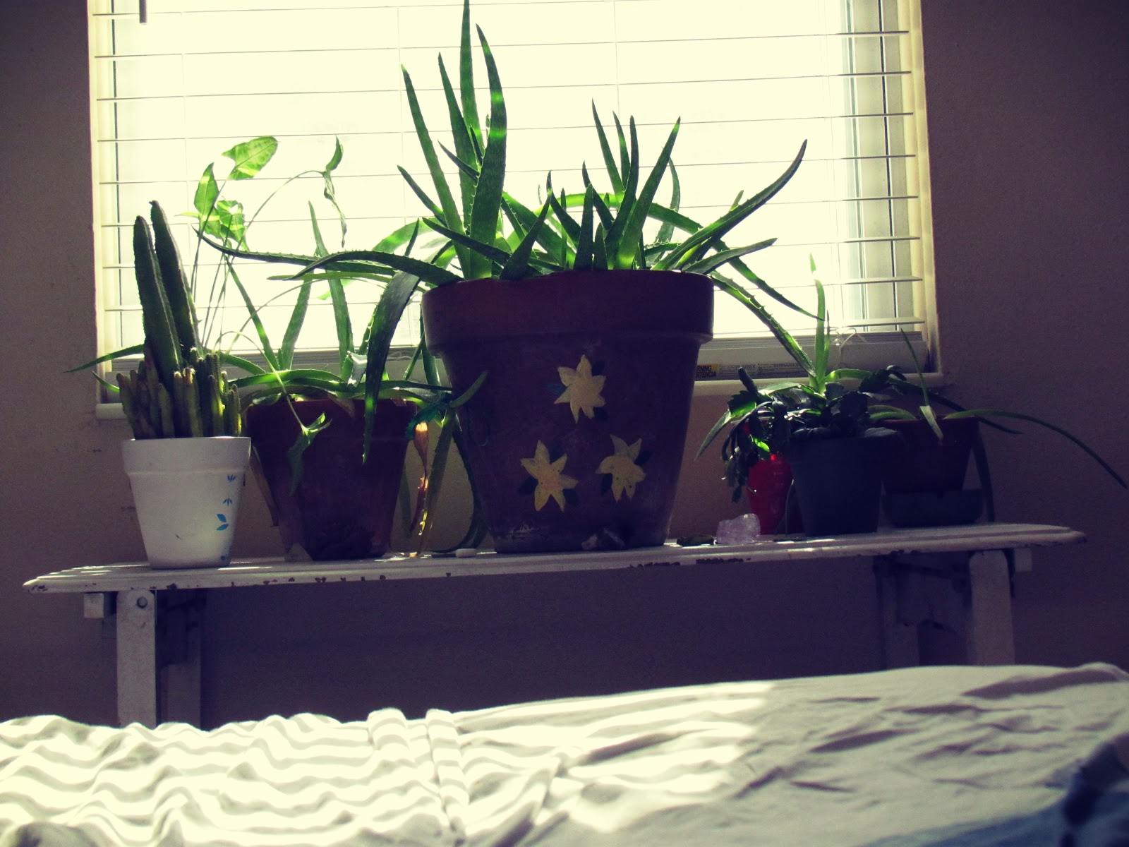 Green Thriving Plant Life on a White Plant Table in Nature + Bedroom Houseplants