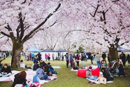Traveling ke Tokyo, Berikut Tempat di Mana Kamu Bisa Melihat Bunga Sakura