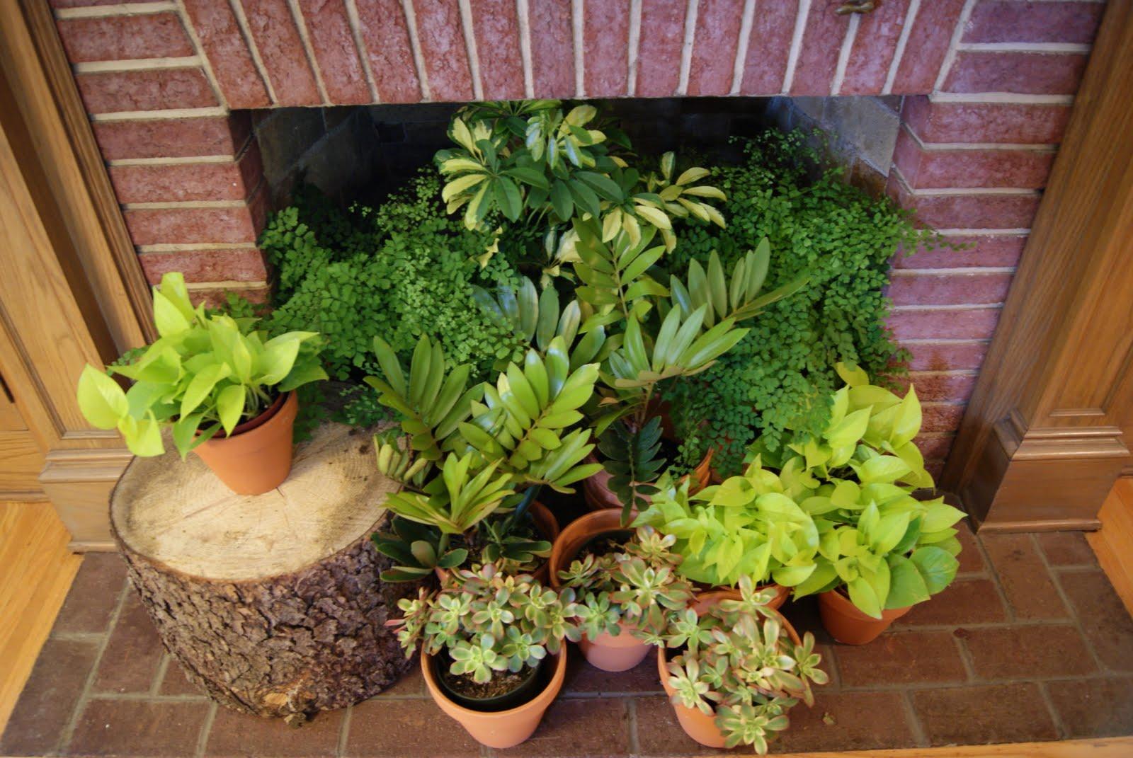 Nest full of eggs summer 11 ideas house - Indoor plants decoration ideas ...