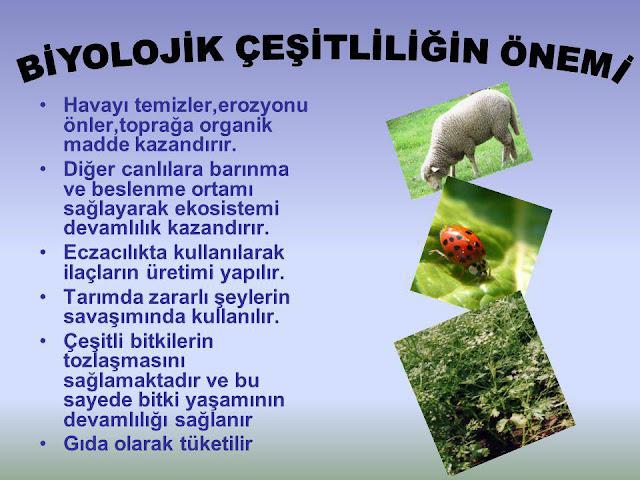 11. Sınıf Gün Yayınları Coğrafya 26. Sayfa Cevapları 1. Ünite