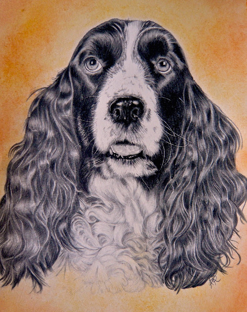 detailed and life-like drawing of a spaniel