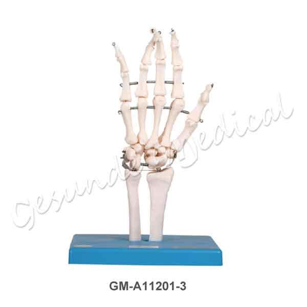 Harga manekin tulang bagian telapak tangan