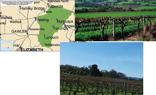 kebun anggur terbesar