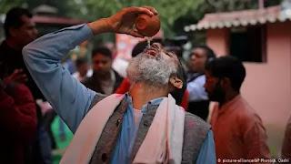 Dipercaya Bisa Tangkal Covid-19, Ratusan Orang di India Minum Urine Sapi