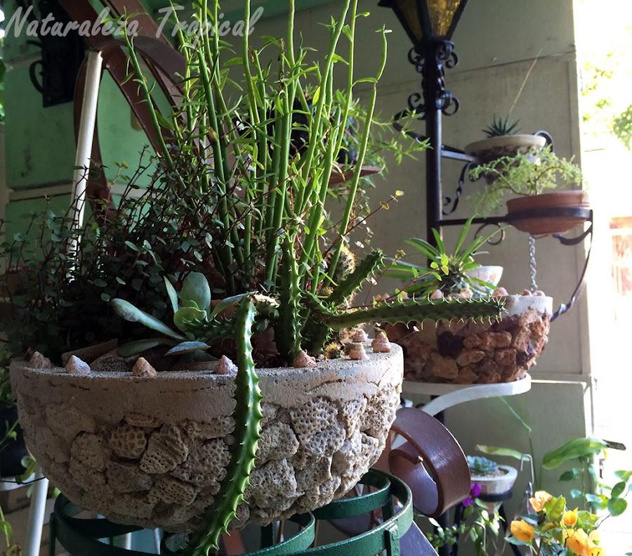 Varias suculentas adornando una terraza