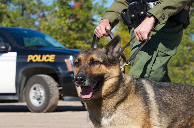most famous police dog breeds