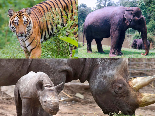 animals-why-you-should-visit-india