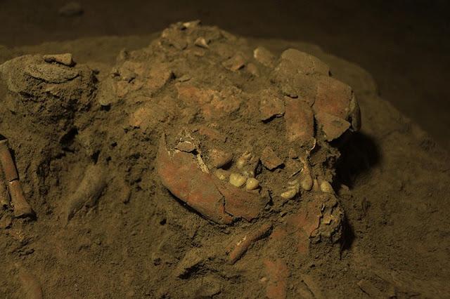 Restos fragmentarios del cráneo humano. El cráneo y los dientes comprimidos de una mujer joven se encontraron dentro de una cueva de Indonesia. Crédito: Universidad de Hasanuddin
