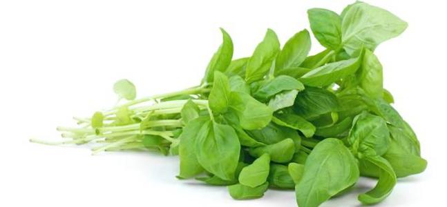 Cara Menumbuhkan Microgreens Tanaman Herbal dan Tanaman Lainnya
