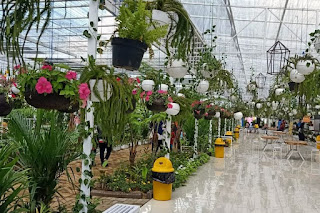 Flora wisata San Terra de La Fonte