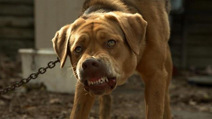 Borzalmas: halálra kínozták a kutyákat Nyíregyházán - videó
