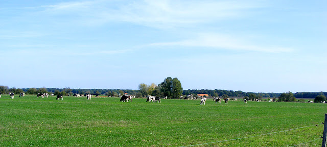 Dairy herd, Indre et Loire, France. Photo by Loire Valley Time Travel.