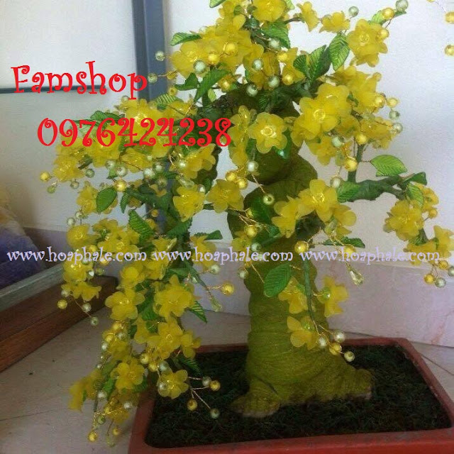 Goc bonsai cay hoa mai tai Hoang Sam