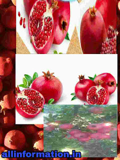 Pomegranate peel extracts could help fighting COVID-19, research finds