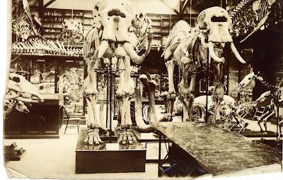 Fotografías antiguas de museos