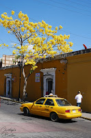 Yellow cab, Oaxaca, Mexique, Mexico, travel, voyage