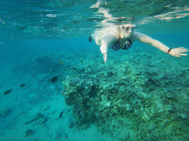 Snorkelling the Red Sea; Naama Bay, Sharm, Egypt