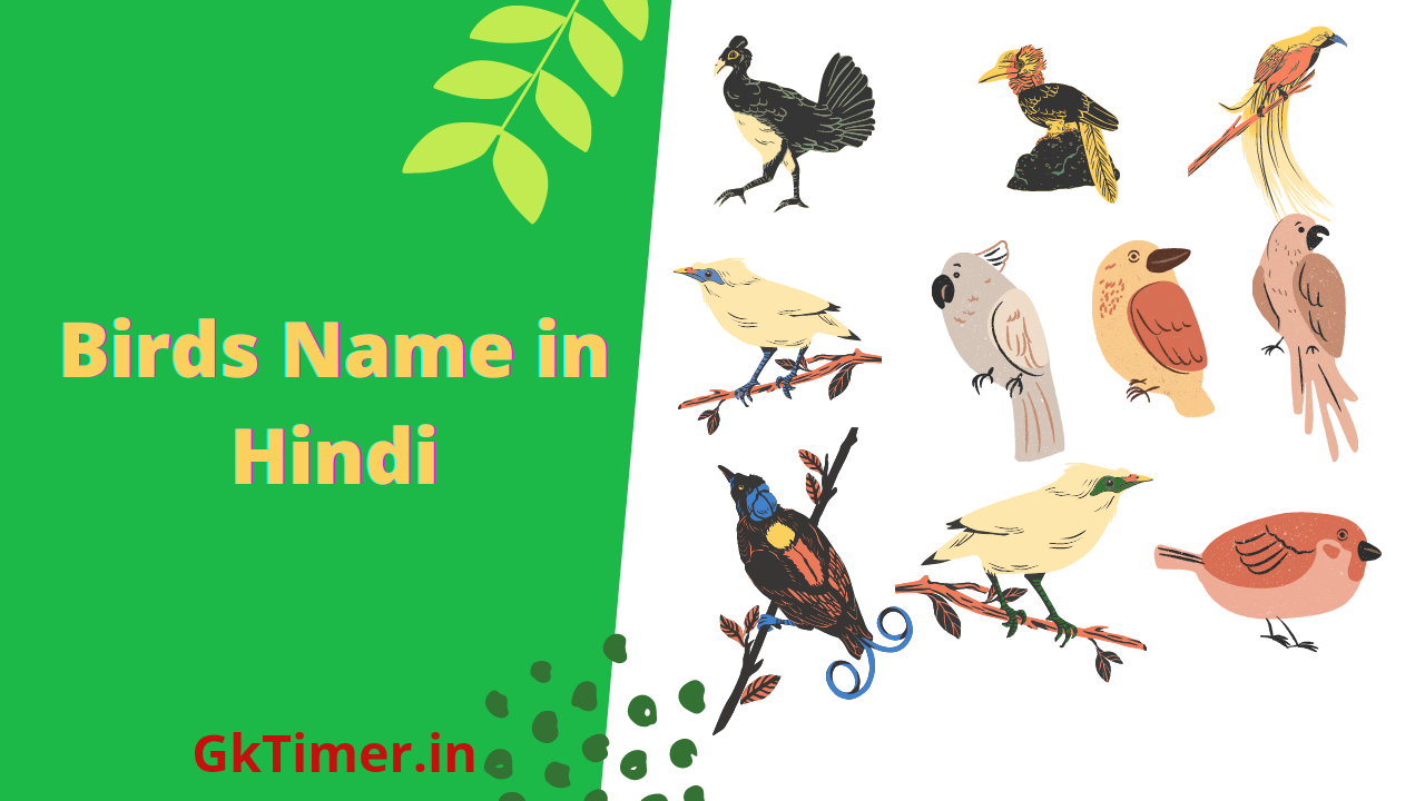 Birds Name in hindi(Name of Birds in Hindi)