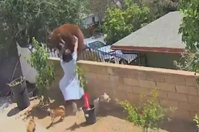 California teen pushes bear off wall to protect family dogs