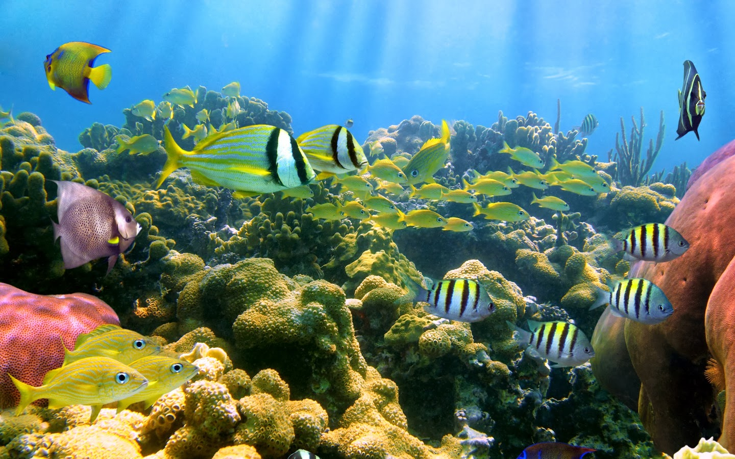 ewallpicsCoral Reef Fish Background