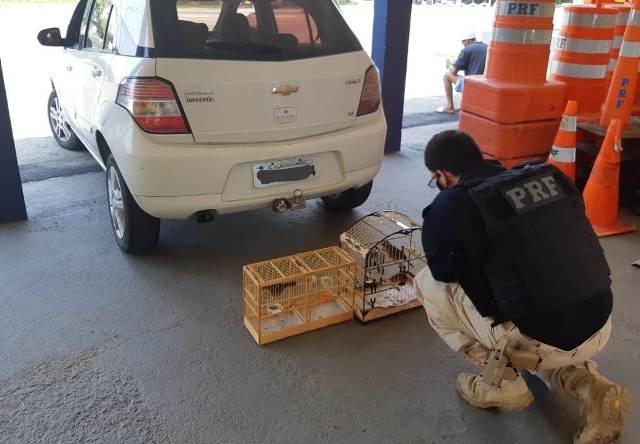 PRF apreende aves silvestres em automóvel em Registro-SP