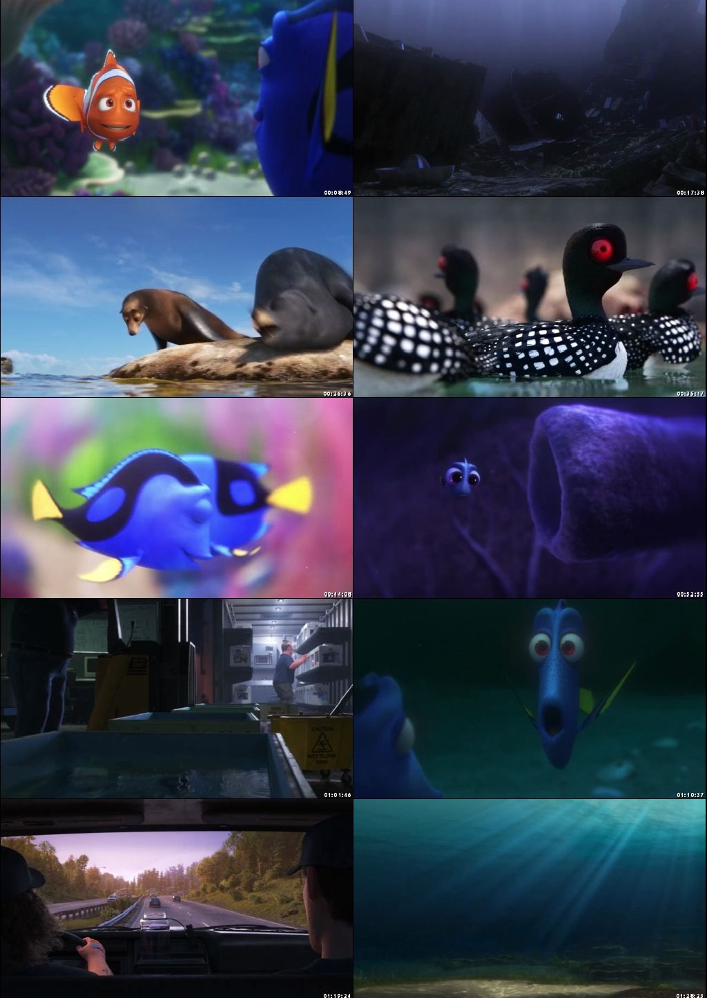 Screen Shot Of Finding Dory 2016 300MB Full Movie Hindi Dubbed Free Download 480P BRRip Small Size PC Movie
