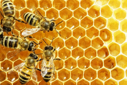 3 Ways to Test Honey's Purity