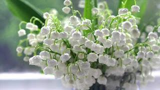 Цветок имени Юрий - ландыш