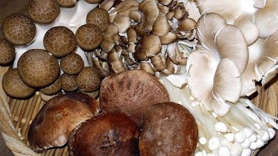 Mushroom cultivation franchise - Biobritte mushrooms
