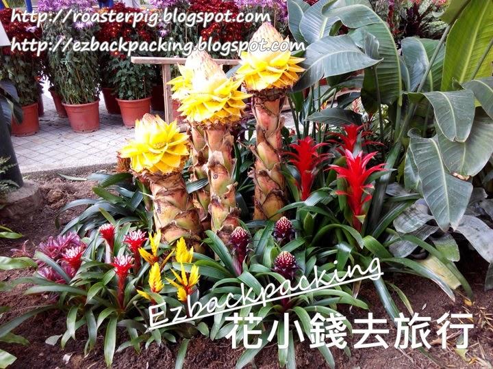 荃灣德華公園花卉展覽