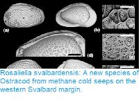 https://sciencythoughts.blogspot.com/2018/05/rosaliella-svalbardensis-new-species-of.html