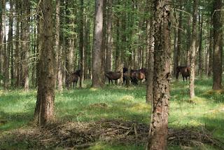 Eine Herde brauner Ponys steht im Wald zwischen Bäumen