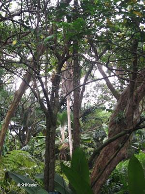 wet Hawaiian forest near sea level