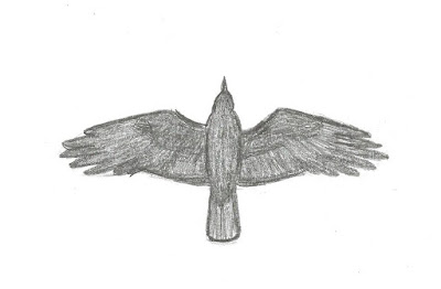 Figure 24: Flight shape of American Crow.